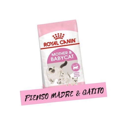 0,5 kg de pienso para gatitos y madres lactantes